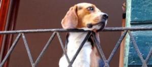 tenere-cani-e-gatti-in-un-condominio-si-puo_392047