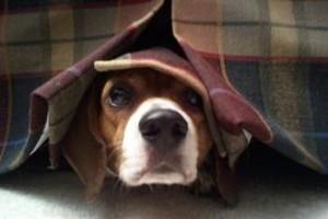 come-tranquillizzare-un-cane-che-ha-paura_2ecdf00e42e394095ca9fdab08606b75