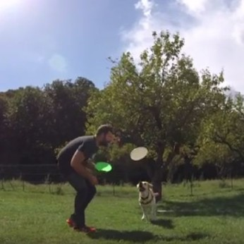 mina disc dog